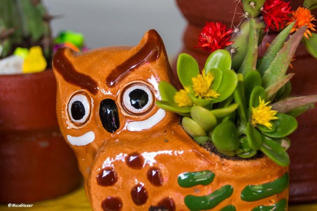 Miniaturas - Buho y su Cactus